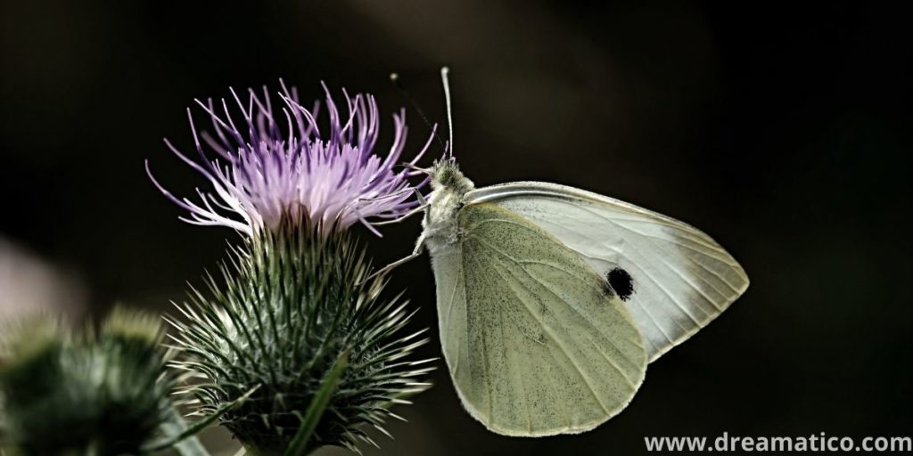 Is White Butterfly Meaning-Secret Signal Of God?