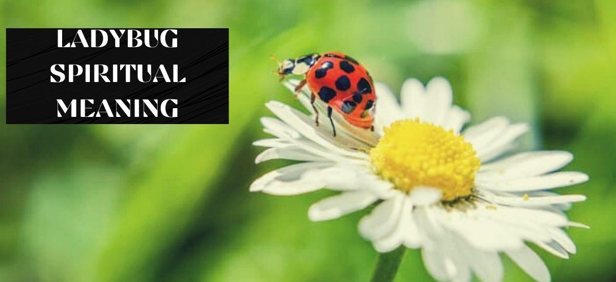 ladybug spiritual