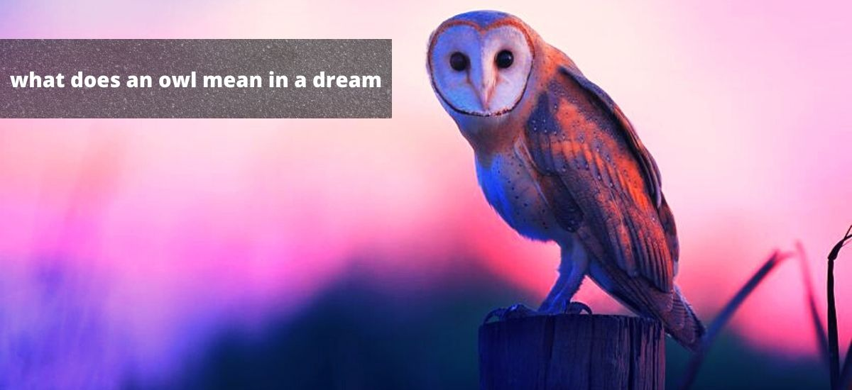 what does an owl mean in a dream